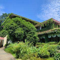 中國茶葉博物館用戶圖片