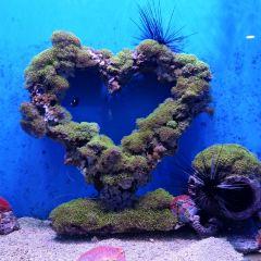 武漢東湖海洋世界用戶圖片