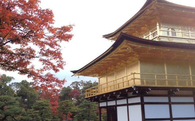 京都旅行におすすめ!