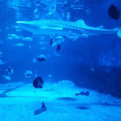 Yantai Haichang Whale Shark Ocean Park User Photo