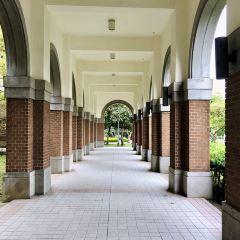 台灣大學張用戶圖片