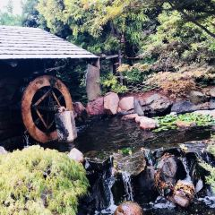 塔斯馬尼亞皇家植物園用戶圖片