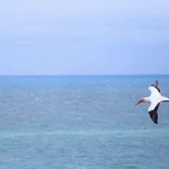 穆里懷海灘用戶圖片