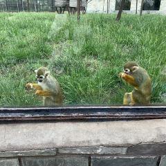 스자좡 도심 동물원 여행 사진