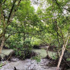 Sungei Buloh Wetland Reserve User Photo