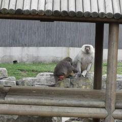 Shangfang Shan Senlin Dongwu World User Photo