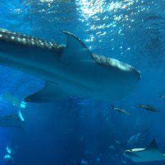 海洋博公園のユーザー投稿写真