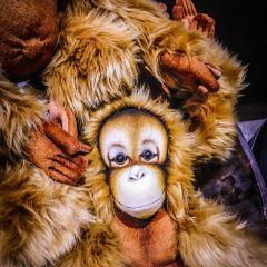 墨爾本動物園用戶圖片