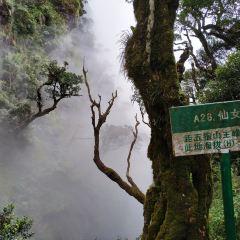 Wuzhishan Tropical Rainforest User Photo