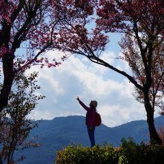 Wuliang Mountain Sakura Valley User Photo