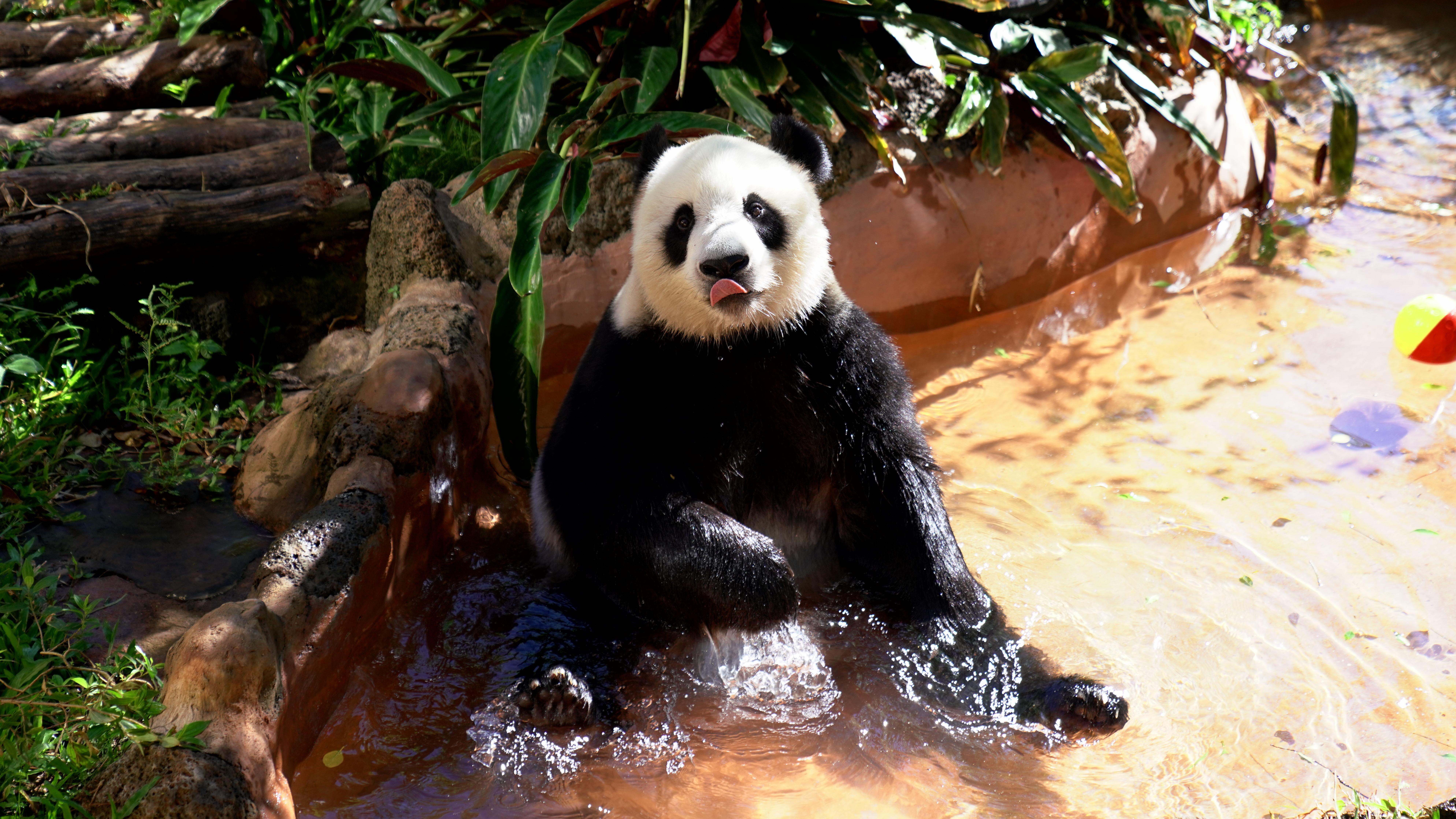 海南熱帶野生動植物園