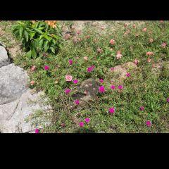 Orchid Garden User Photo