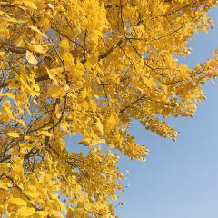 Baoji Botanical Garden User Photo