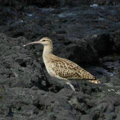 Kiholo Bay User Photo