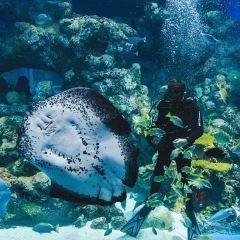 Cairns Aquarium User Photo