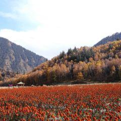 仙米國家森林公園用戶圖片