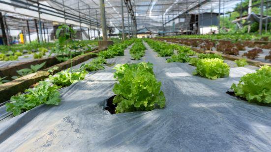 內蒙古吉雅泰休閒農業風情園