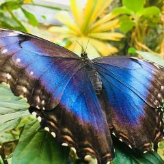 The Butterfly Palace User Photo