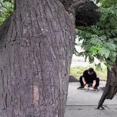 巨龍友好公園用戶圖片