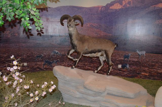 Helanshan Ziran Museum