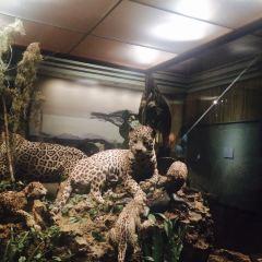 Carnegie Museum of Natural History用戶圖片