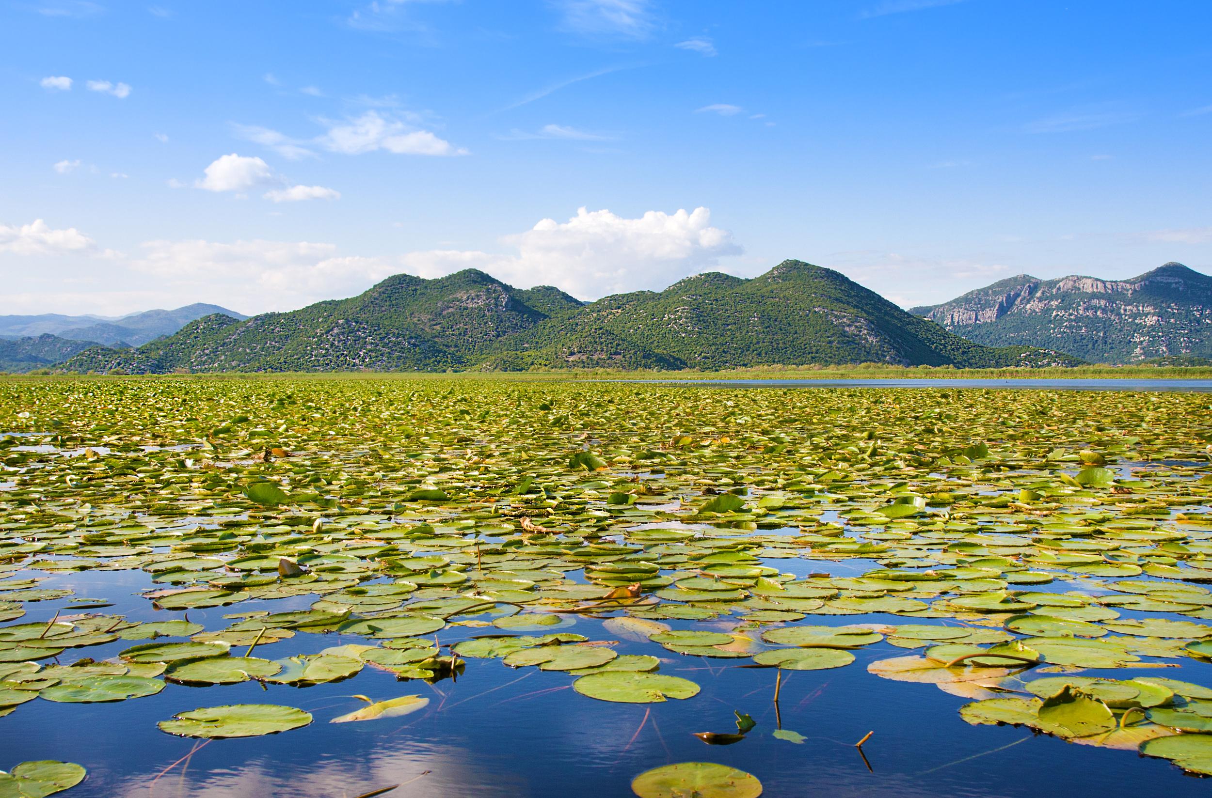 Scutari Lake