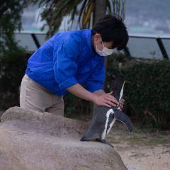 沖縄美ら海水族館のユーザー投稿写真