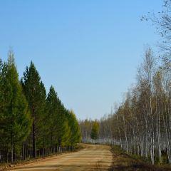 白樺林用戶圖片