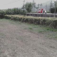 雲海芳草千畝花卉博覽園用戶圖片