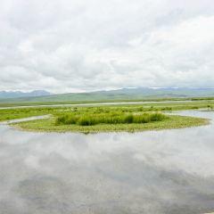 若爾蓋花湖用戶圖片
