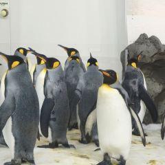 墨爾本水族館用戶圖片