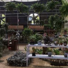 Qixiashan Botanical Garden User Photo