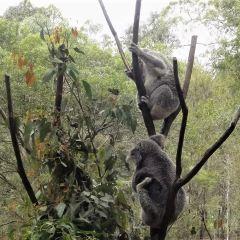 澳洲動物園用戶圖片