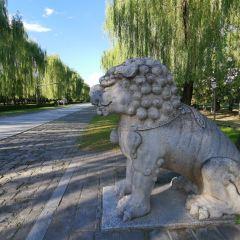 Shenlu Park User Photo