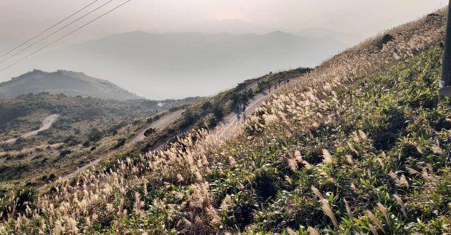 【芒草季節】新手輕鬆賞芒草,秋冬郊遊行山路線推薦