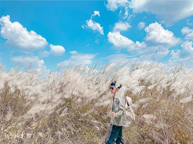 【芒草季懶人包】秋高氣爽,芒草季來了!全台11個網美景點一次看