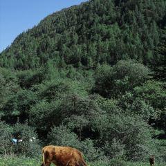 쓰구냥산 여행 사진