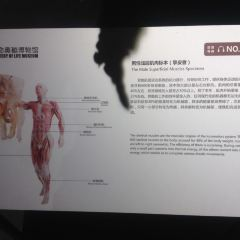 Mystery of Life  Museum User Photo