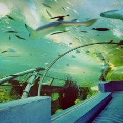 曲江海洋極地公園用戶圖片