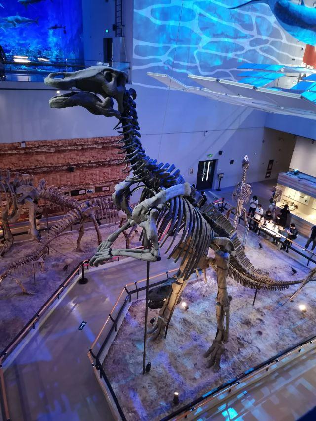 正佳自然科學博物館