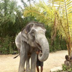 Elephant Jungle Sanctuary Phuket User Photo