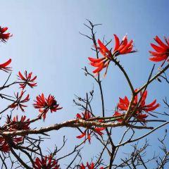 Qionghai National Wetland Park User Photo