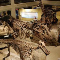 休斯頓自然科學博物館用戶圖片