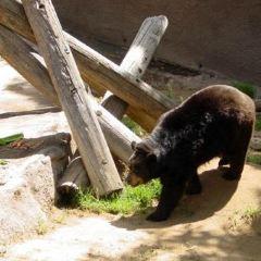 洛杉磯動物園用戶圖片