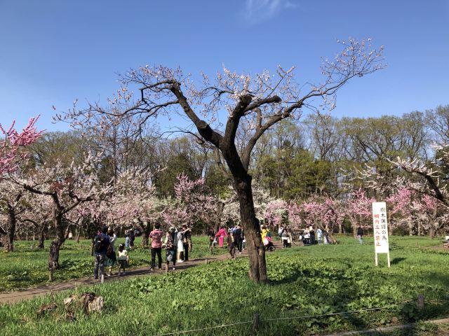 마루야마공원