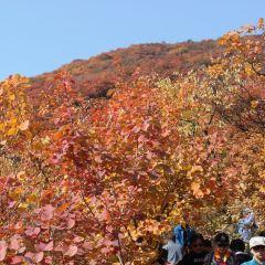 坡峰嶺用戶圖片