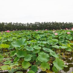 Baiyinshuichuan Wetland Park User Photo