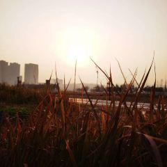 양후 습지공원 여행 사진