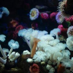 Ripley's Aquarium Of Canada User Photo