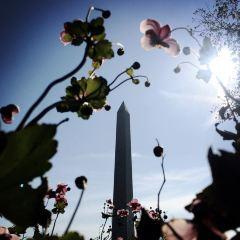 華盛頓紀念碑用戶圖片